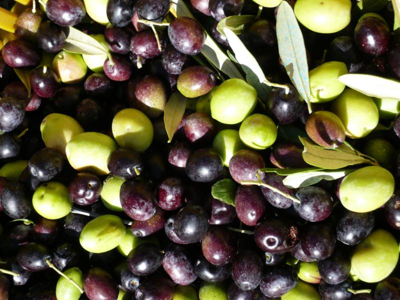 Olive (15)